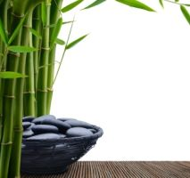 bamboo plant; feng shui in the home